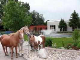 pferde01